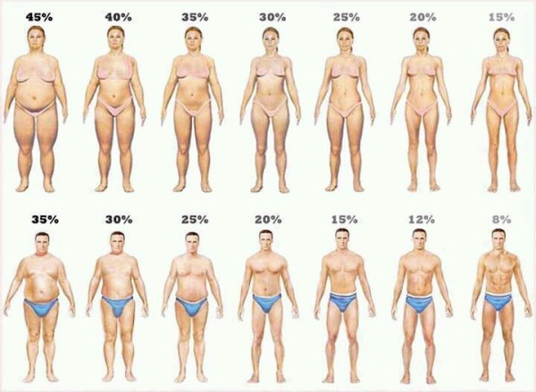 men and women visual bodyfat cartoon